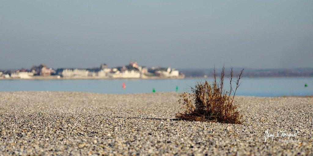 Baie-de-Somme-0194.jpg